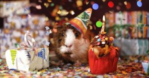 Create original birthday greetings with Word