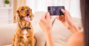 Essential pet apps on Android mobiles